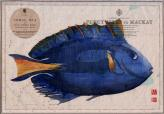 blue tang fish on old chart