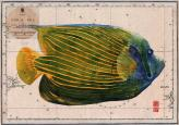 green angel fish on old chart