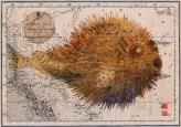 puffer fish on old chart